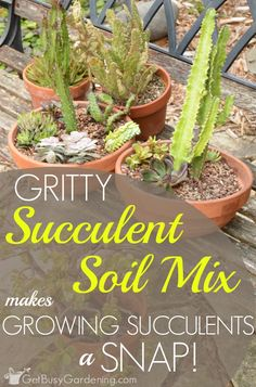 The cause of succulent death is overwatering, which is a huge problem if you use the wrong type of soil. So to avoid overwatering, it's best to use a gritty succulent soil mix for growing your succulents and cactus plants. (AD) - Garden and Home Types Of Succulents, Growing Succulents, Cacti And Succulents, Planting Succulents, Planting Flowers, Propagating Succulents, Growing Plants, Cactus House Plants, Patio Plants