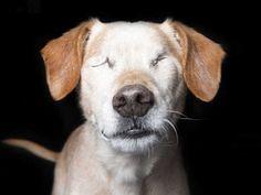 Animais com deficiência participam de ensaio encantador