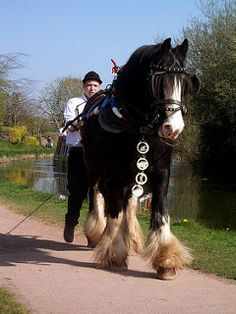 Shire horse pulling a barge | by maisonburke