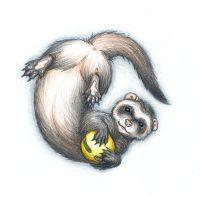 Ferret with Toy by Joceweir