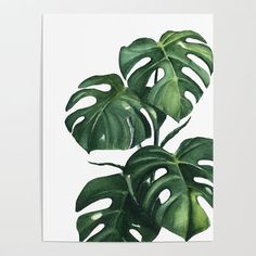 plants Painting wallpaper - Monstera watercolor painting, handmade painting, watercolour, original paint, Poster by poganiaczkroow Plant Painting, Plant Drawing, Plant Art, Painting & Drawing, Painting Wallpaper, Watercolor Plants, Watercolor Paintings, Painting Leaves Acrylic, Leaf Paintings