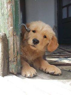 Just peeking in to say hello :)