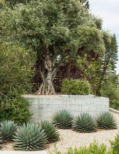 Mediterranean Garden Design, Zen Garden Design, Small Yard Landscaping, Spanish Landscaping, Drought Tolerant Garden, Landscape Edging, Desert Landscape, Dry Garden, Xeriscaping