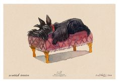 Scottie on a couch print out of original watercolour by GROOVYart, $40.00