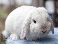 Zwergwidder schwarzgranne by zwergloh on DeviantArt Cute Baby Bunnies, Bunny Bunny, Cute Babies, Rabbit Information, Rabbit Pictures, Mini Lop, Cute Gif, Rabbits, Make Me Smile