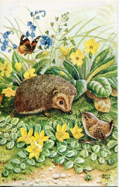 Woodland Gossips by Racey Helps vintage postcard, PK 375, Hedgehog, bird, butterfly, flowers, garden by sharonfostervintage on Etsy