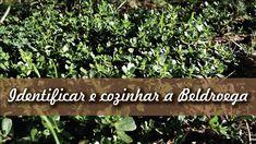 Como identificar e cozinhar a Beldroega | How to identify and cook the C...