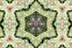Wishing you all a Happy Season! Lush Green Mandala Royalty-Free Image available in my Portfolio. Purchase to use as on your Wall. With Extended License you can Resale. Royalty Free Images, Royalty Free Stock Photos, Spiritual Practices, Lush Green, Image Now, Succulents, Pure Products, Art Prints, Nature