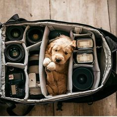 "30.2k Likes, 253 Comments - Dogs Terrific ❤ (@dogsterrific) on Instagram: ""I can fit anywhere. Lets go! Follow the best dog account @outdoorpups @outdoorpups @outdoorpups .…"""