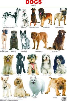 41-DOG.jpg (1288×1929)