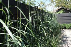 Een zwarte schutting , geeft je planten een mooie uitstraling !!