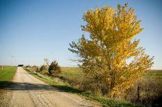 Country Road in Fall 8x12 Digital by DreamersLilDreamShop on Etsy