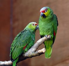 The Lovable Parrots: Surprising and Exceptional Facts ~ Amazing Animals