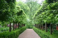 Marylyn Abbott - West Green House, Hampshire | Pleached hornbeam avenue underplanted with box.