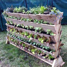 Vertical Vegetable Gardening Project