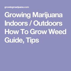 Growing Marijuana Indoors / Outdoors How To Grow Weed Guide, Tips
