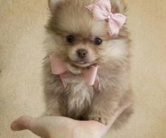 Omg, the cutest!!