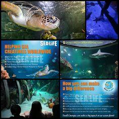 Sea Life Aquarium and Ocean Education
