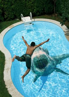 shark in pool