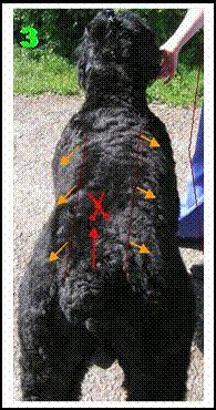 Grooming Black Russian Terriers https://pagez.com/3532/33-facts-about-dogs