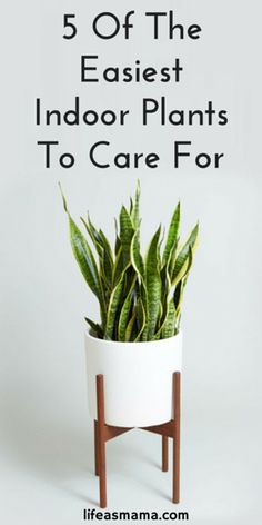 Do you have a brown thumb, but love plants? Check out this list of super easy indoor plants to care for that will bring life to your home!