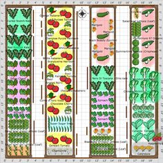 Free 20 X Vegetable Garden Plan