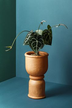 Limited edition made from terracotta by hand. Indoor Plants Clean Air, Indoor Plants Low Light, Blue Rooms, Blue Walls, Small Plants, Terracotta Pots, Plant Care, Light Table, Mix Match