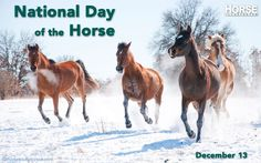 On this day, we reflect on what horses mean to us.