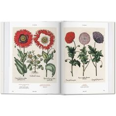 Basilius Besler's Florilegium. The Book of Plants ❤ liked on Polyvore featuring home, home decor, floral decor, books, flower home decor, flower plates and flower stem