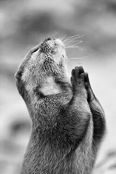 Otter in Anjali Mudra   Svava Sparey Yoga Holidays #yoga