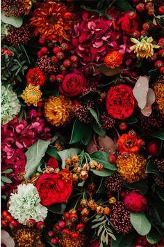 Castle Shopping in Poland - Pflanzen - - blumen - Wallpaper Roses Photography, Nature Photography, My Flower, Beautiful Flowers, Dark Flowers, Flower Phone Wallpaper, Flower Aesthetic, Flower Backgrounds, Planting Flowers