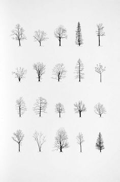 """Katie Holten has made a series of tree drawings. In 2015 she created a """"Tree Alphabet"""" and published the book """"About Trees"""". A series of tree drawings was commissioned by the Zentrum Paul Klee for the group exhibition """"About Trees"""" in Drawn Art, Hand Drawn, Art Plastique, Painting & Drawing, Drawing Trees, Trees Drawing Simple, Life Drawing, Branch Drawing, Drawing Drawing"""