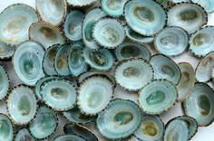 10 Natural Aqua Green Teal Limpet Seashells- Wedding and Beach Decor - Turquoise Bulk Craft Supplies, Vase Filler, Nautical Ocean, Aquarium on Etsy, $3.95