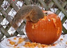 WunderPhotos®.   Uploaded by: Nita — Thursday December 19, 2013 — IL