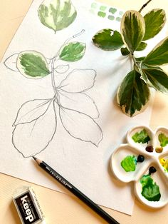Everyday a bit of practice Bloom, Sketches, Watercolor, Art, Drawings, Pen And Wash, Art Background, Watercolor Painting, Kunst