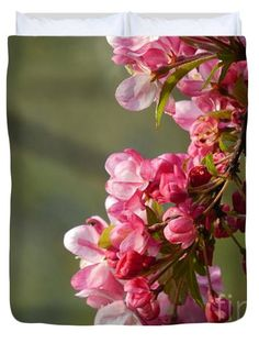 Crabapple Blossoms in Spring. Copyright 2014-2015 Rowena Throckmorton All Rights Reserved