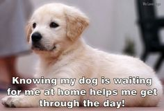 Knowing my dog is waiting for me at home helps me get through the day!