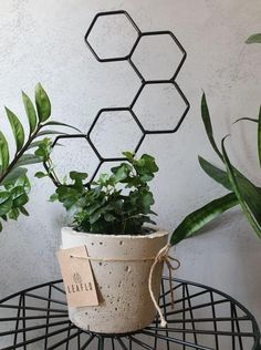 Drabinka do kwiatów domowych Grow High Honey - Leaflo Planter Pots, Urban, Design
