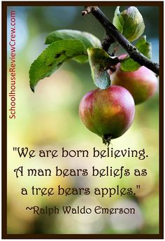 But I only have three apples on my tree this year.am I in trouble? Girls Are Like Apples, Girls Be Like, Apple Quotes, Daily Quotes, Life Quotes, Apple Pie From Scratch, Favorite Quotes, Best Quotes, Believe