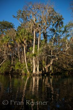 Chasawiska Springs, near Homosassa Florida