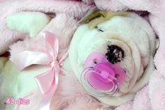 Pinky Cuteness