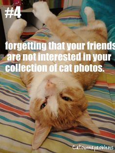 Yeah, if you're my facebook friend and you don't like cat photos, you're gonna have a bad time.