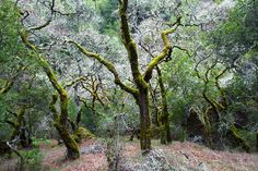 Marin County in Winter | In the Field: Photo Blog by Richard Wong