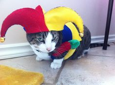 Pin for Later: Your Comprehensive Guide to Dog and Cat Halloween Costumes Jester