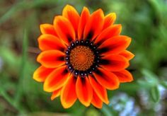 Nice Flower Pictures - Nice Flower Picture - Nice Flowers to find nice flowers gallery @ http://heartjohn.com/nice-flower-pictures/