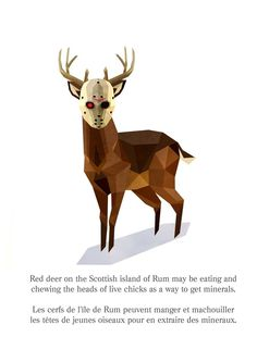 Weird animals facts (part1) by Cosmosnail, via Behance