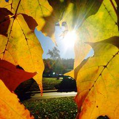 Sun through leaves
