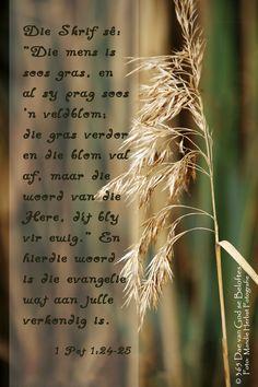 """Dag 109 Bybelverse 1 Pet 1:24-25 Die Skrif sê: """"Die mens is soos gras, en al sy prag soos 'n veldblom; die gras verdor en die blom val af, maar die woord van die Here, dít bly vir ewig. En hierdie woord is die evangelie wat aan julle verkondig is."""