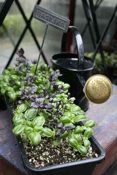 Trädgårdsflow: Regn så det räcker