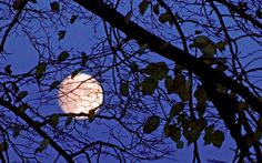 """""""Pełnia mroźnego Księżyca"""" na Waszych zdjęciach. http://kontakt24.tvn24.pl/najnowsze/pelnia-mroznego-ksiezyca-na-waszych-zdjeciach,148530.html"""